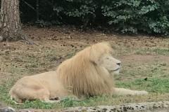 Serengeti-Park0318