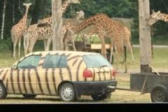 Serengeti-Park1618